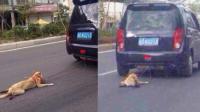 残忍司机开车拖行小狗