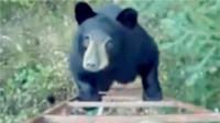 小黑熊想爬树屋被吓跑