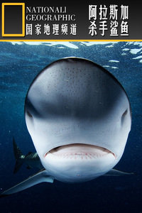 寰宇地理之阿拉斯加杀手鲨鱼