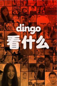 dingo 看什么 2016