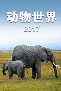 动物世界 2017