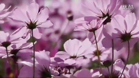 克莱德曼-野花