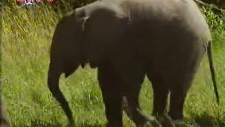 《野性非洲》系列之1母子情(上)