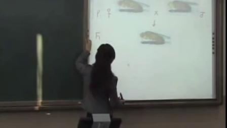第五屆電子白板大賽《基因在染色體上》(人教版生物高二,北京市第十三中學:王玉婕)