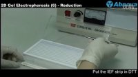 2D Gel Electrophoresis (6) Reduction & Alkylation