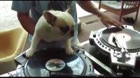 会打碟的DJ狗狗