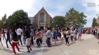 康奈尔大学Gangnam Style快闪!!江南风格千秋万代一桶浆糊