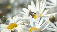蘇教版三年級科學下冊第二單元 植物的一生