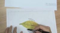 2015優質課視頻《神奇的樹葉》小學美術嶺南版一年級-深圳-沙河小學:郭志良