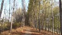 視頻: 2015年秋*河堤